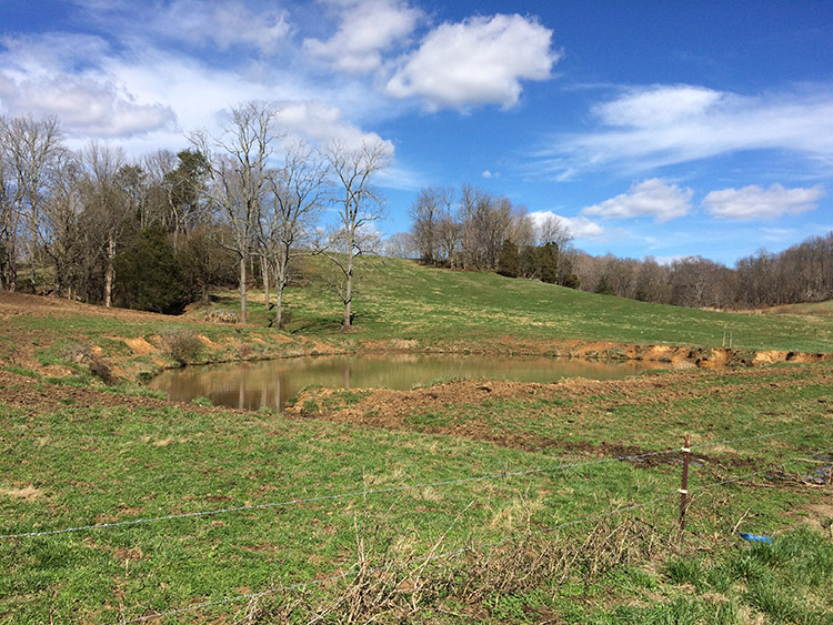 Pond - Homes and land for sale in Lebanon, KY and Marion County, KY