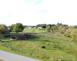 13.49 Acres M/L. In Raywick KY.